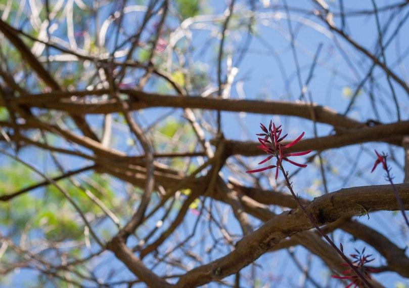 Botanical Gardens-18