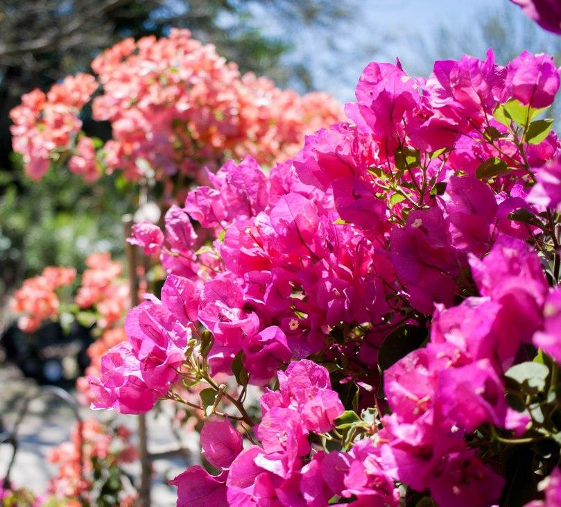 Botanical Gardens-44