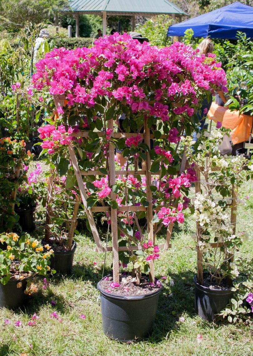 Botanical Gardens-45