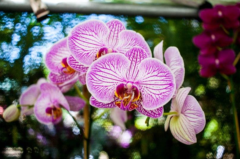 Botanical Gardens-46